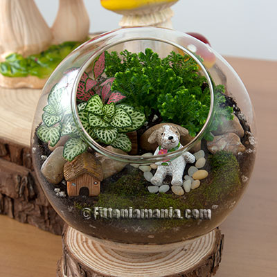 Terrarium / Potted plant